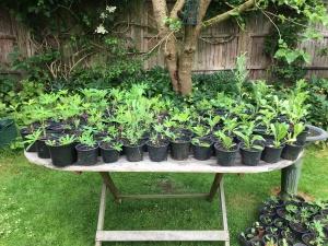 plant sale
